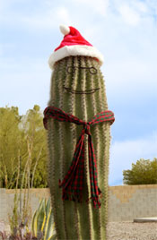 Arizona holiday events