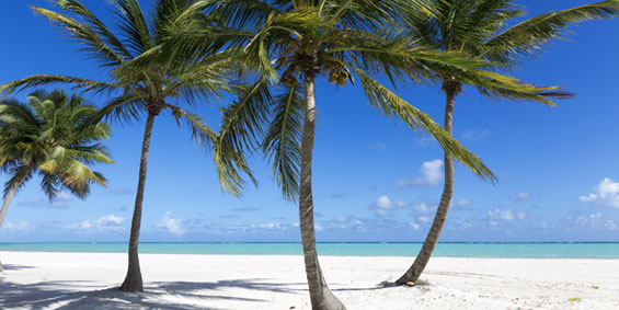 Respiratory Travel Jobs In Florida
