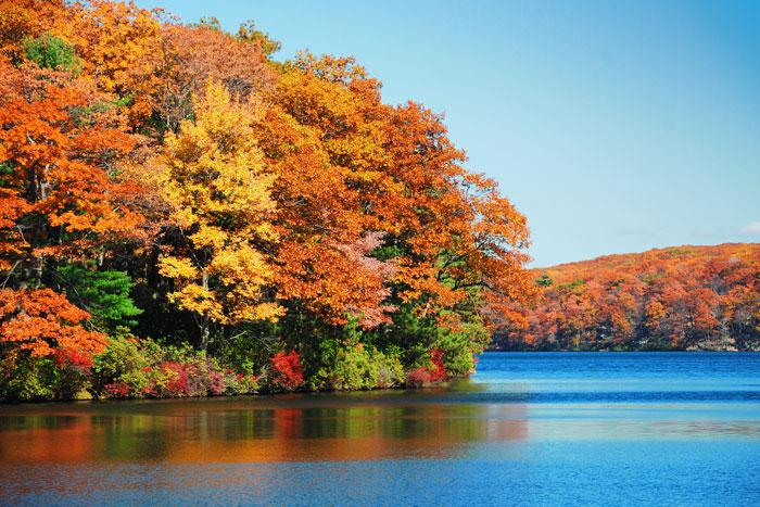 Fall Color at Massachusetts