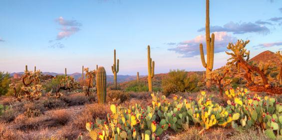 Glendale Sonoran Desert