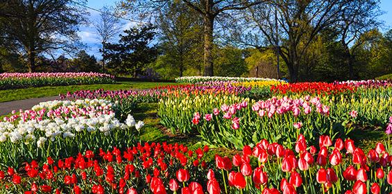 Landscape of Virginia tulip garden in spring at Arlington Ridge Park