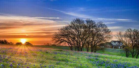 Wildflower field in Texas