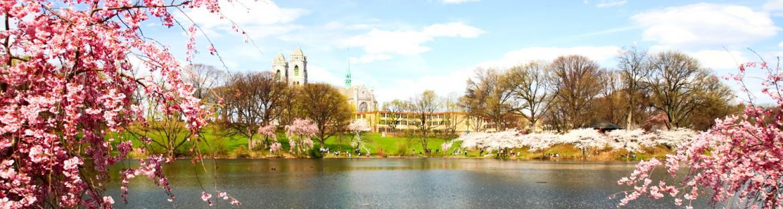 Newark, New Jersey cherry blossom festival