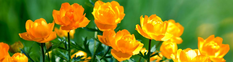 Orange flowers in Oklahoma