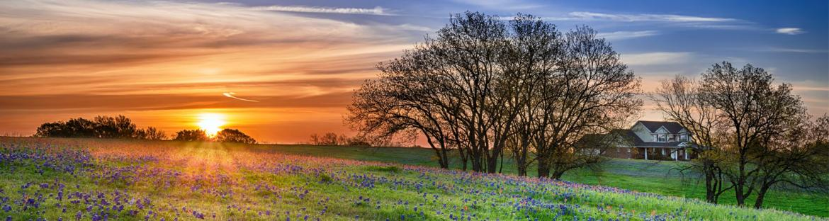 Wildflower field at sunrise in Texas