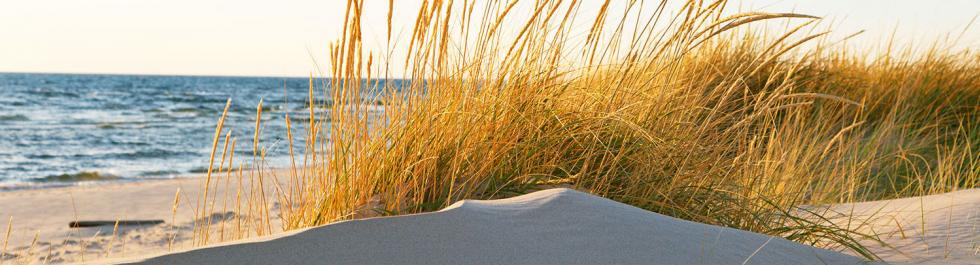 autumn dune grass in michigan - Nicu Travel Nursing