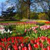 Landscape of Virginia tulip garden in spring at Arlington Ridge Park
