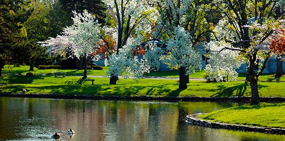Flowering trees on mirror lake forest lawn in Buffalo, New York
